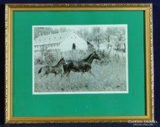 0C218 Eredeti lovas fotográfia Polner szignóval