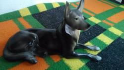 Hollóházi kutya 21 cm