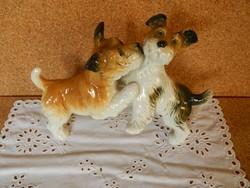 ENS kutyapár