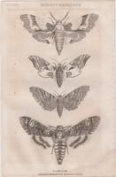 Acélmetszet: Schmetterlinge (1800-as évek)
