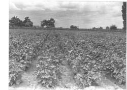 Borászat, szőlészet Vintage fotó 18*24 Prehoda József borász felvétele