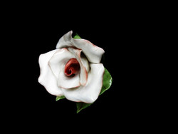Aquincumi gyönyörű rózsa