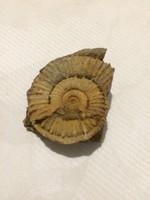 Ammonitesz!