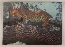 0V501 3 dimenziós leopárdos állatos képeslap