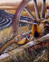 Fácánok 50x40cm olaj-vászon festmény