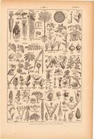 Növények, nyomat 1923, francia, 19 x 29 cm, lexikon, eredeti, növény, levél, virág, rendszer, gyökér