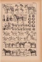 Ló, nyomat 1923, francia, 19 x 29 cm, lexikon, eredeti, testalkat, patkó, lovaglás, lovas