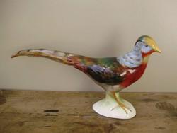Bodrogkeresztúri gyönyörű festésű nagyméretű madár,fácán,ezüstfácán