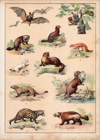 Denevér, hermelin, mongúz, nyest, menyét, litográfia 1880, eredeti, 24 x 34 cm, nagy méret, állat