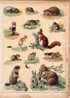 Mókus, mormota, pocok, hód, hörcsög, sün, litográfia 1880, eredeti, 24 x 34 cm, nagy méret, állat