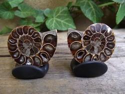Ammonit csigapár, fosszília ásvány, kristály
