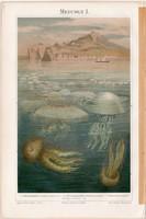 Medúza I., litográfia 1896, német nyelvű, eredeti, színes nyomat, tenger, óceán, víz