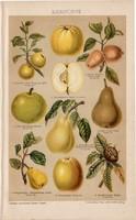 Magvas gyümölcsök, litográfia 1893, színes nyomat, német nyelvű, Brockhaus, körte, alma, gyümölcs