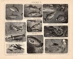 Halak IV., V., VI., egyszínű nyomat 1893, német, eredeti, Brockhaus, hal, tenger, hering, ördöghal