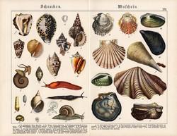 Csigák és kagylók, litográfia 1920, eredeti, 32 x 41 cm, nagy méret, német, csiga, kagyló