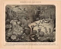 Tengervízi akvárium, egyszínű nyomat 1894, német, eredeti, Brockhaus, tenger, hal, rák, óceán, állat