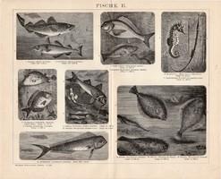 Halak I., II., III., egyszínű nyomat 1893, német, eredeti, Brockhaus, hal, tőkehal, makréla, tenger