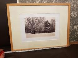 Christine Triebert fotóművész művészi fényképe az 500 éves fáról