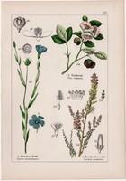 Tea, házi len, csermelyciprus és kakukkszegfű, konkoly, litográfia 1895, 17 x 25 cm, növény, virág