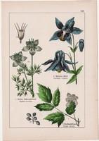 Harangláb, katicavirág, békabogyó és sisakvirág, szarkaláb, litográfia 1895, 17 x 25 cm, virág