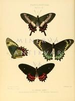 Lepkék, pillangók 6. Vintage/antik zoológiai illusztráció. Kitűnő minőségű reprint nyomat