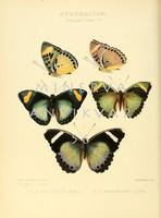 Lepkék, pillangók 8. Vintage/antik zoológiai illusztráció. Kitűnő minőségű reprint nyomat