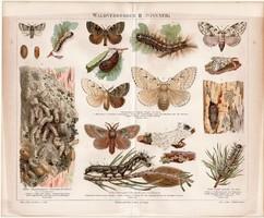 Erdei kártevők (lepke) II, litográfia 1888, német nyelvű, eredeti színes nyomat, pillangó, báb, erdő
