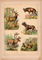Állatok (12), litográfia 1902, eredeti, kis méret, magyar, állat, őz, szarvas, muflon, rénszarvas