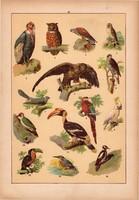 Állatok (16), litográfia 1902, eredeti, kis méret, magyar, állat, madár, bagoly, héja, papagáj
