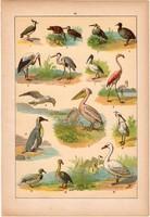 Állatok (19), litográfia 1902, eredeti, kis méret, magyar, állat, madár, gém, flamingó, pingvin