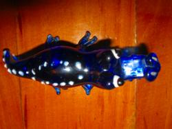 Üveg krokodil
