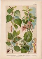 Magyar növények 60, litográfia 1903, színes nyomat, virág, bükk, mogyoró, nyír, gyertyán, fa (3)