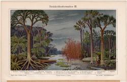 Őskori növényzet (kőszén), színes nyomat 1908, német nyelvű, eredeti, litográfia, páfrányfa, növény