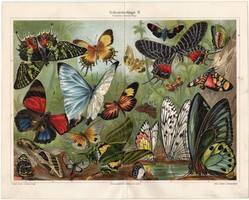 Pillangók II., 1908, színes nyomat, német nyelvű, eredeti, lepke, pillangó, egzotikus, litográfia