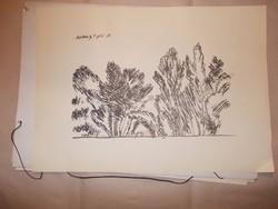Vaszary J: Buja növények