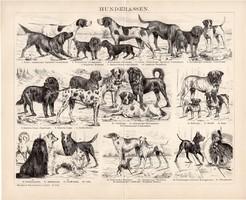 Kutyafajták, egyszínű nyomat 1893, német nyelvű, eredeti, kutya, állat, vadászkutya, régi