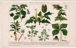 Mérgező növények II., litográfia 1895, színes nyomat, német nyelvű, növény, belladonna, régi