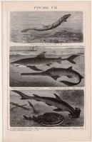 Halak VII. és VIII., litográfia 1893, egyszín nyomat, német nyelvű, Brockhaus, állat, hal, tenger