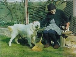 0Y312 Kárpáti Zoltán : Néni kutyával cicával fotó