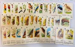 Madár kvartett régi kártya szép lapokkal