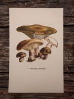 Lilatönkű pereszke és Gyűrűs tuskógomba lithográfai, nyomat, GOMBA