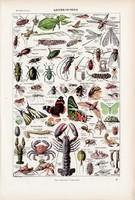 Ízeltlábúak, színes nyomat 1923, francia, 19 x 29 cm, lexikon, eredeti, lepke, rovar, rák, bogár