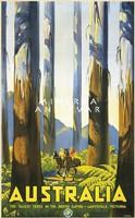 Terep lovaglás erdőben, óriás fák, sport utazási reklám Ausztrália 1936 Vintage/antik plakát reprint
