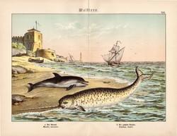 Delfin, narvál, litográfia 1886, német nyelvű, eredeti, 32 x 41 cm, nagy méret, óceán, tenger