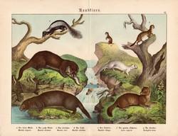 Ragadozók (2), litográfia 1886, német nyelvű, eredeti színes nyomat, 32 x 41 cm, nagy méret, vidra
