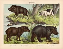 Vaddisznó, sertés, víziló, tapír, litográfia 1886, német, eredeti, 32 x 41 cm, nagy méret, patások