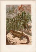 Tüskés gyík, litográfia 1883, színes nyomat, eredeti, Brehm, Thierleben, állat, hüllő, moloch, ördög