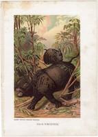 Indiai rinocérosz, litográfia 1903, színes nyomat, eredeti, magyar, Brehm, állat, Az állatok világa