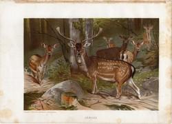 Dámvad, litográfia 1903, színes nyomat, eredeti, magyar, Brehm, állat, Az állatok világa, szarvas