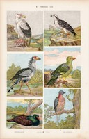 Galamb, keselyű és kuvik, dögkeselyű, litográfia 1885, eredeti, 26 x 42 cm, madár, állat, nyomat